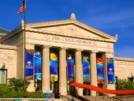 5 Chicago Museums You Should Visit Every Year