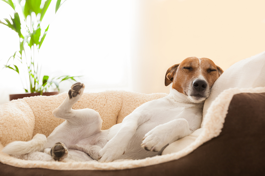 Where to Search Luxury Dog Friendly Condos For Sale in